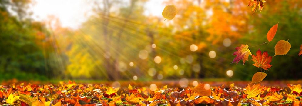 Veilig de herfst door